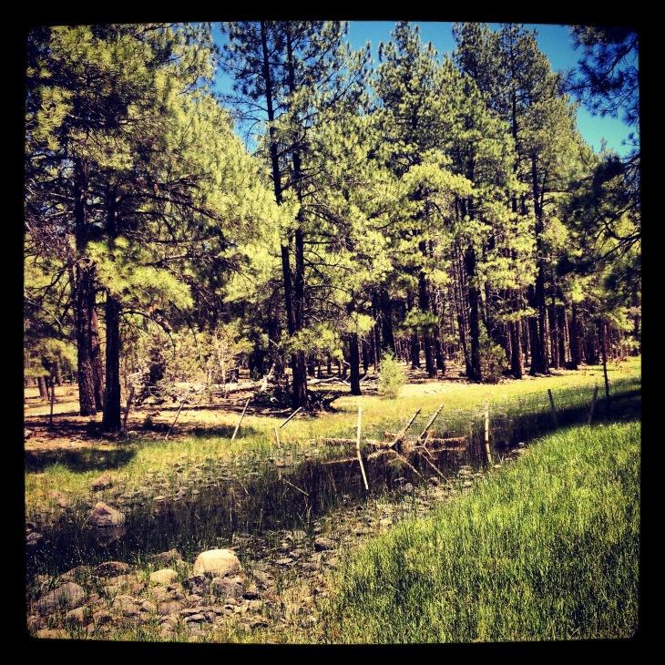 Arizona Stream