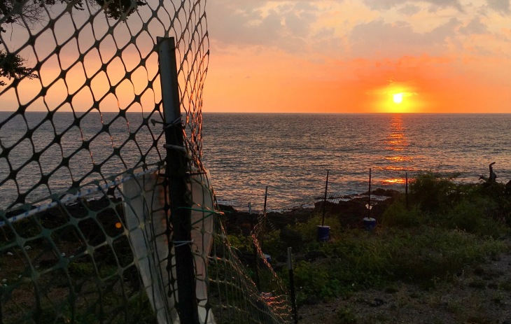 Fenced in Sunset Hawaii